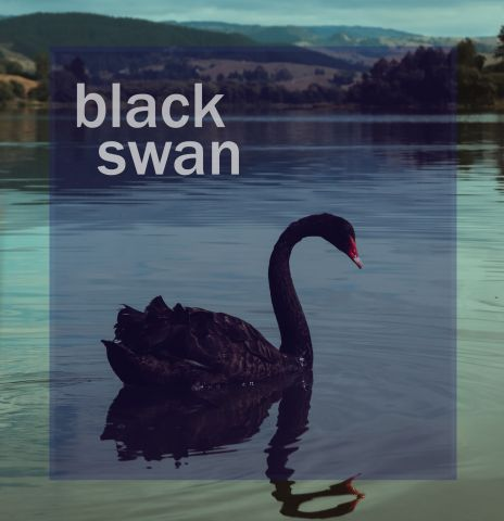 Pengertian Black Swan